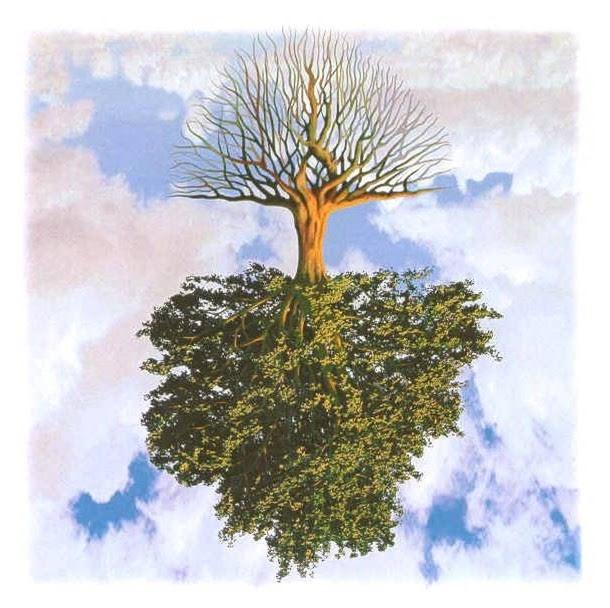 albero-a-rovescio